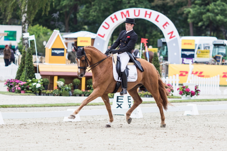 Julien Despontin (BEL) and Waldano 36, who lead a distinguished field after Dressage at Luhmühlen (GER), fifth leg of the FEI Classics™ 2014/2015. (Hanna Broms/FEI)
